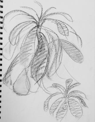 Greenhouse Sketchbook #5